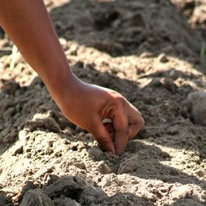 planting-hand-300