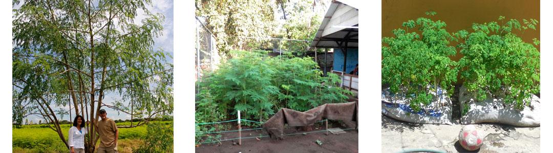 Planting-Options