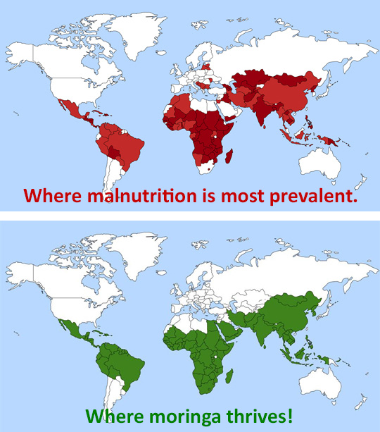 Maps---Malnutrition-and-Moringa